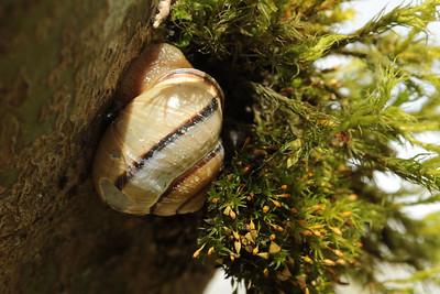 snailmoss
