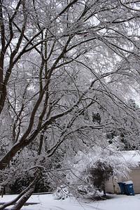 snow20170106b
