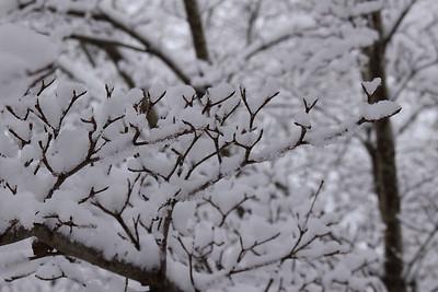 snow20170106g