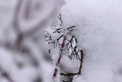 snow20170106h