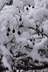 snow20170106d