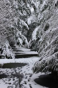 snow20170106j