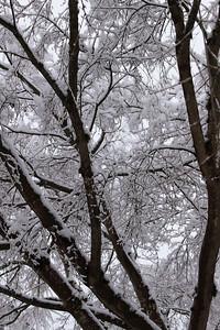 snow20170106c