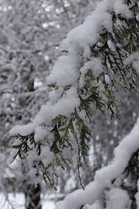 snow20170106m