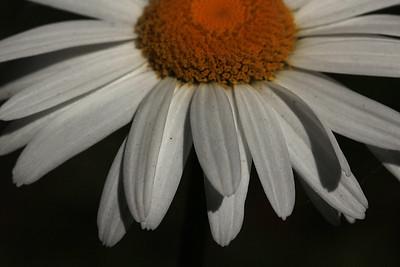 daisy03