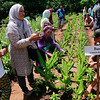 Marawi evacuees undergo agricultural training