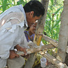 Extracting sugar juice from sugarcane