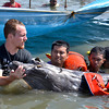 DAVAO. A team from the Bureau of Fisheries and Aquatic Resources and Bone Collector owner Darrell Blatchley tend to a 12-foot male Blainville's beaked whale with the help of the Coast Guard and Barangay after it was stranded along the shore in Barangay 76-A yesterday. (King Rodriguez)