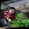Organic farm ni Rodelio Dalisay