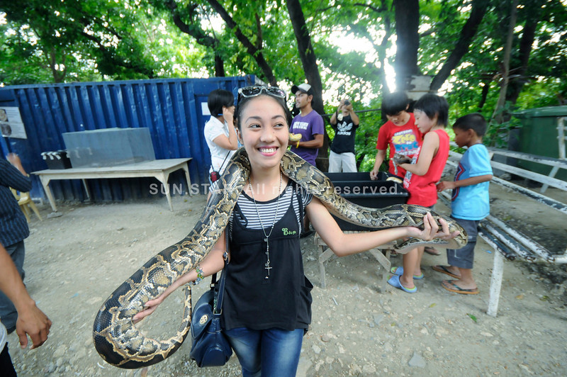 SNAKE CHARM. Did this lady know that a zoo caretaker was bitten by a cobra inside the facility recently. She gamely poses with a python during a visit to the Cebu City zoo. (Sun.Star Photo/Alex Badayos)