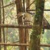 Philippine Eagle Minalwang