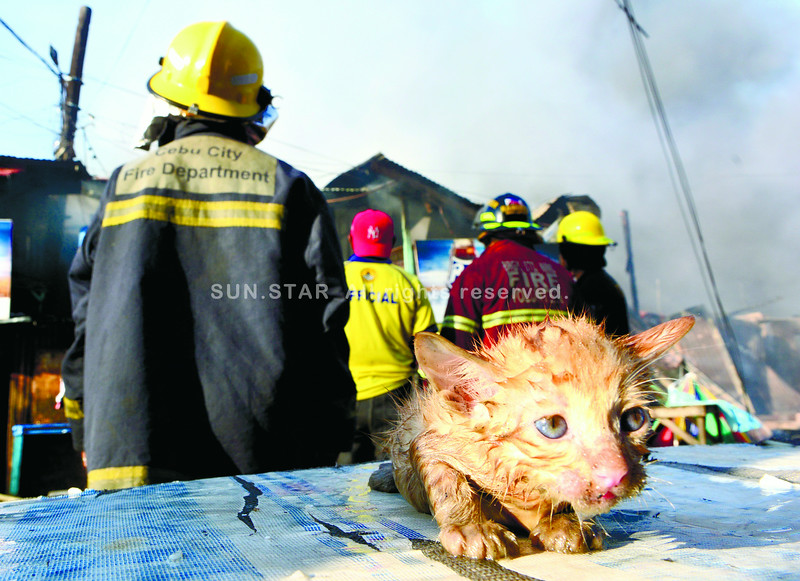 Kitten rescued from Cebu City fire