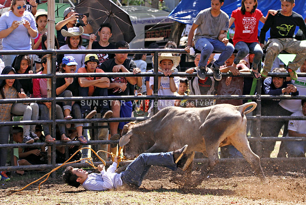 Bull fights back