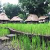 Mini rice terraces