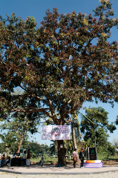 CAGAYAN DE ORO. The mango tree that reportedly saved more than 50 residents during the flood stands still in Isla de Oro. The tree is now being called the Tree of Life. On Monday, the City Government unveiled a marker just beside the tree. (Joey P. Nacalaban)