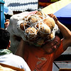 Coconut carrier