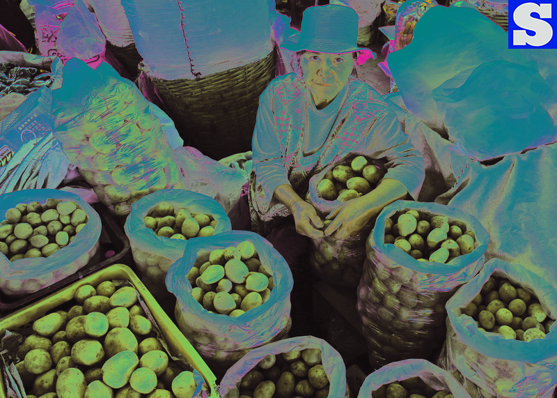 Potato trader
