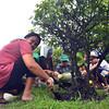 """DAVAO. Mga molupyo sa Barangay 23-C Poblacion, siyudad sa Davao nagtapok sa punoan sa usa ka tamon sa island kay 50 kanila miapil sa """"Food for Work"""" program ni Mayor Sara Duterte- Carpio kagahapon. (Seth Delos Reyes)"""