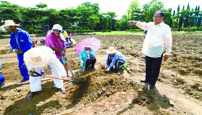 Talisay City Mayor Johnny V. de los Reyes hired 60 to 70 job-order employees to plant organic vegetables on the vacant lot fronting the City Hall as part of his Green Valley Program to make the city the vegetable basket in the south. (Photo by Alex Badayos of Sun.Star Cebu)