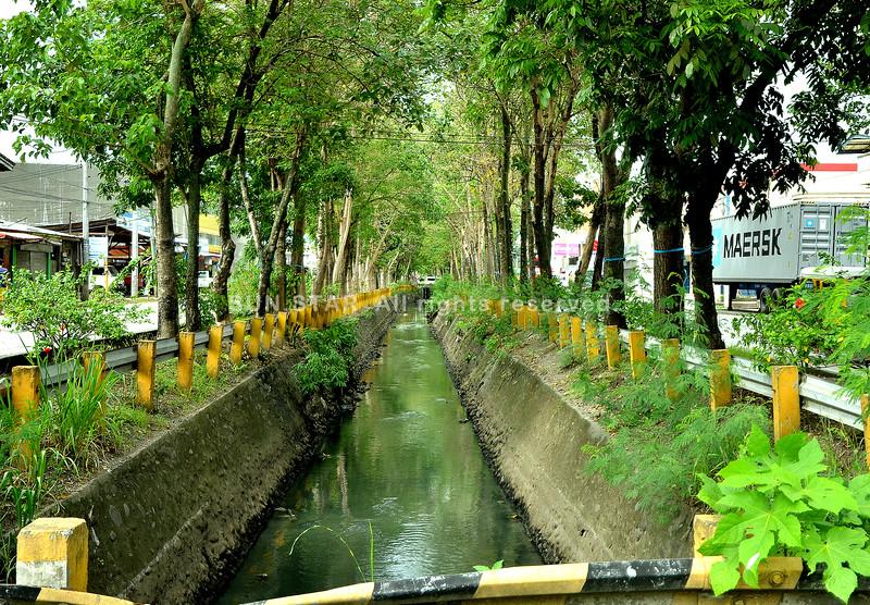 Ribbon-bearing trees in Davao