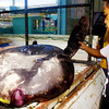 Ocean sunfish found in Cagayan de Oro Ciy
