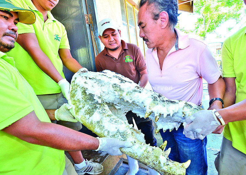 DAVAO. Businessman Sonny Dizon along with his zoo caretakers carry the frozen head of Lolong, the erstwhile world's largest crocodile in captivity, to show the deteriorating condition of the carcass that has been kept frozen for five months already. Dizon is urging national agencies to start the preservation of the cadaver. (King Rodriguez photo/Sun.Star Davao)
