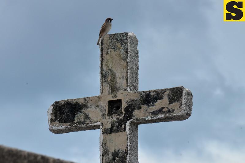 Maya bird perches on the cross
