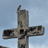 Maya bird perches on the cross