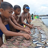 Pier boys flip sliced sardines to dry