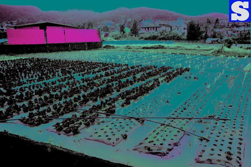 Strawberry farm flooded