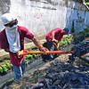Workers clean drainage canal