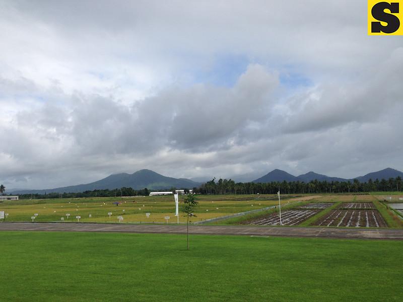 Rice field at IRRI