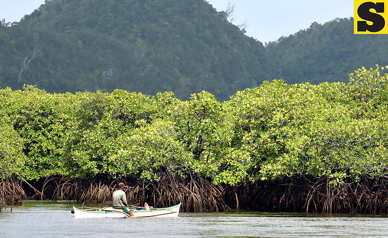 Fisherman near mangrove trees