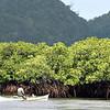 Fisherman near mangrove trees