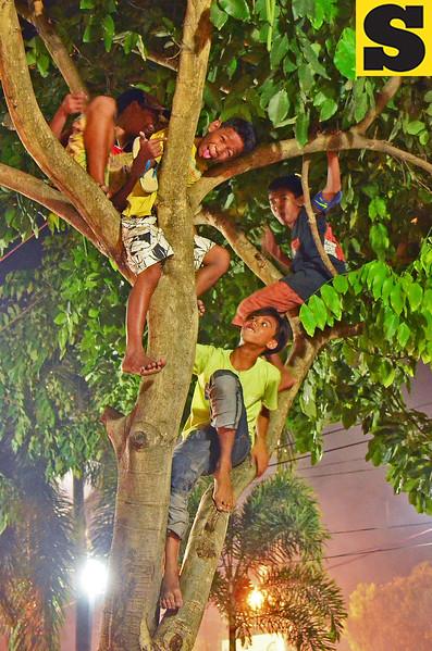 Boys climb tree