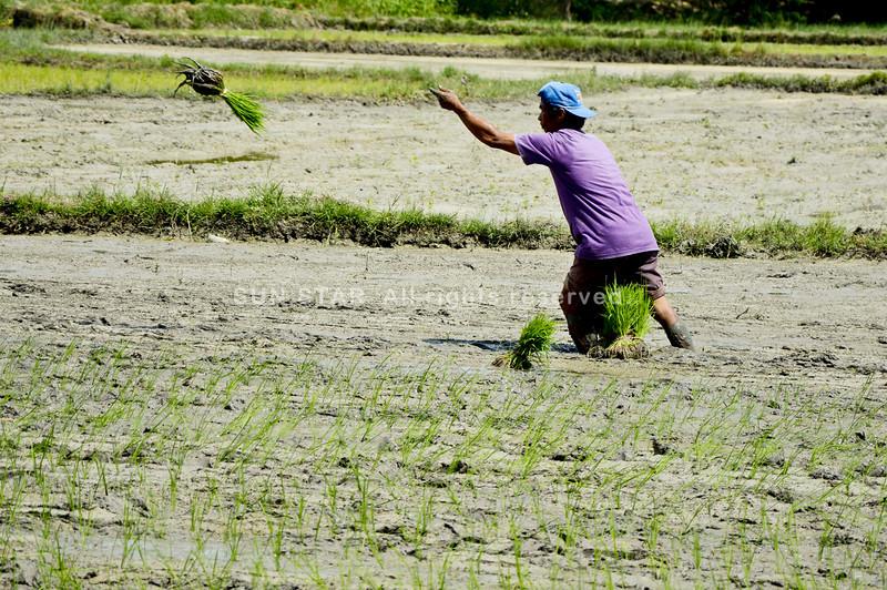 Planting season in Argao, Cebu