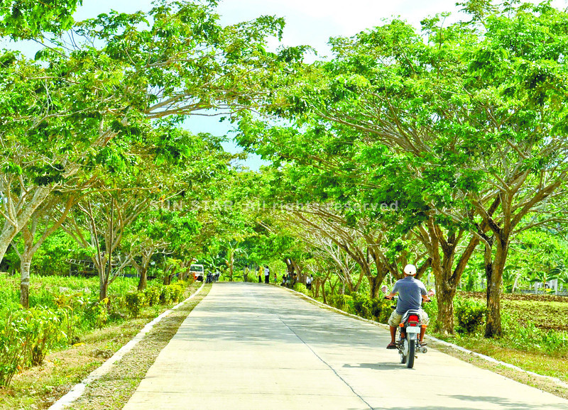 Tree-lined highway in Camotes, Cebu