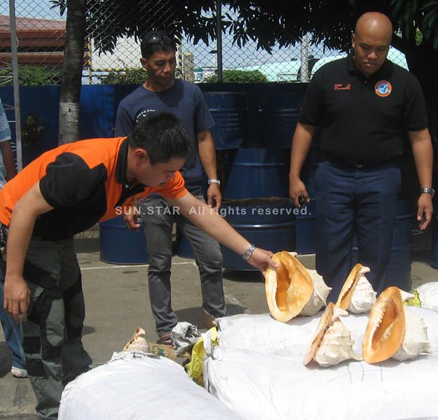 ZAMBOANGA. BFAR Fishery Law Enforcer Raffy Adeltone Tan (left) inspected the confiscated shells on Monday as Zamboanga Coast Guard Station commander Jomark Angue (right) looks on. (Bong Garcia)
