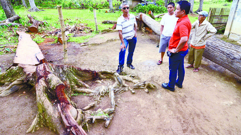 Illegal cutting of trees in Talisay City