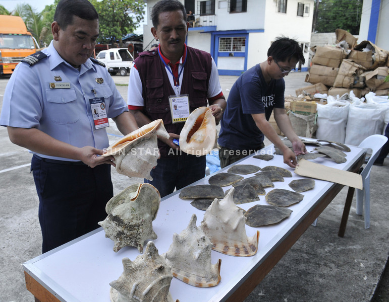 CEBU. Col. Rolando Punzalan (left) of the Philippine Coast Guard and Nathaniel Lucero (center) of the Bureau of Fisheries and Aquatic Resources inspect horned helmet shells and turtle carapace, which were seized from a container van at Pier 2, Cebu City. (Alex Badayos)