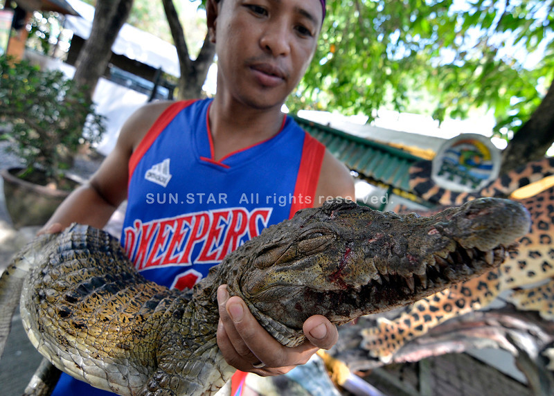 Endangered crocodile killed in Davao City