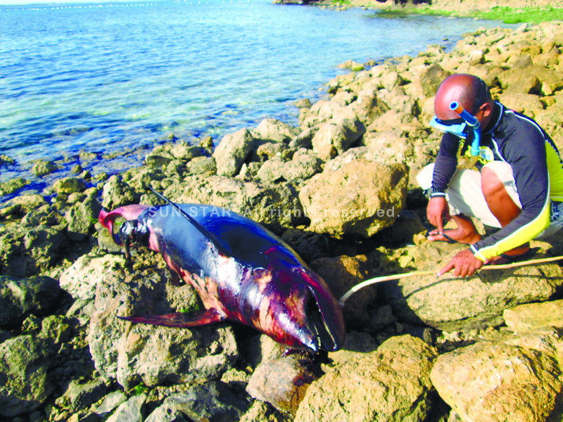 A BOATpropeller or paddle may have hit this dolphin, which was found laying lifeless on the shore of Barangay Mactan in Lapu-Lapu City.  Experts promptly cautioned sailors to slow down every time they see a lone dolphin.   (SUN.STAR FOTO/Allan cuizon)