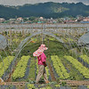 Farmer tends her agricultural crops