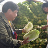 Agriculture Secretary Proceso Alcala