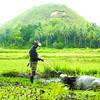 Bohol tourism not diminished