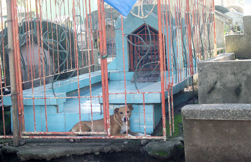 CAGAYAN DE ORO. Looters would surely not dare go inside this mausoleum as a dog is around as guard. Thousands are expected to flock to cemeteries on November 1 and 2 for the annual observance of All Saints' and All Souls' Days. (Joey P. Nacalaban)