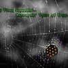 IMG_0411LuckyPP3SharperFrescoMoodyB&WSpiderText2 copy