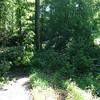 TreeDown2