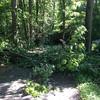 TreeDown1