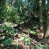 Treedown3